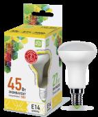 LED-R50-econom 5.0 Вт (220~240В, E14, 400Лм, 3000К)
